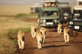 penwell safari