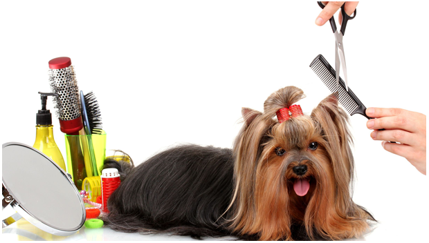 mobile pet grooming downtown miami