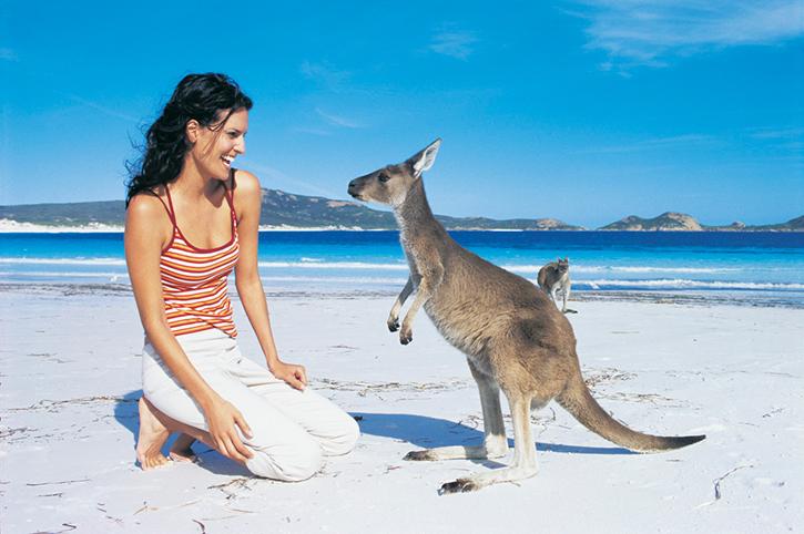 see kangaroos near melbourne