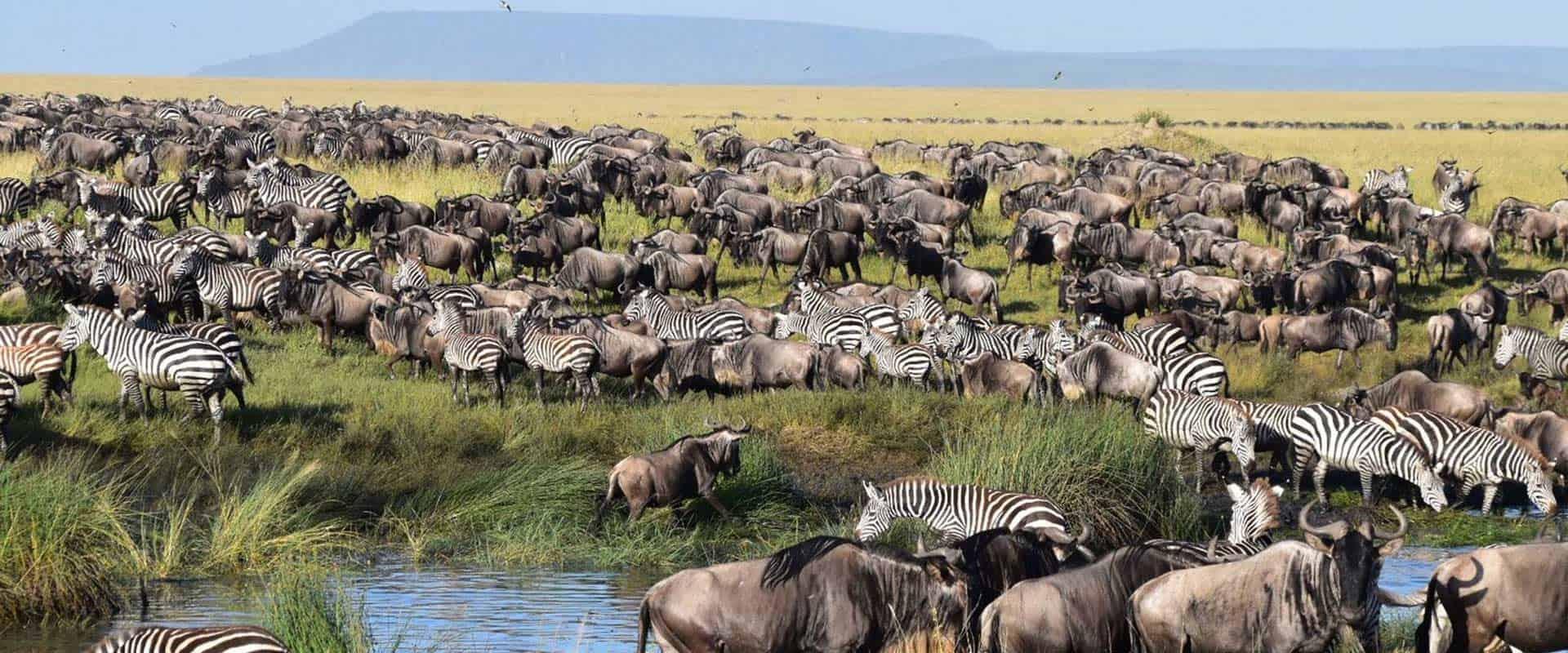 Choose a Good Safari
